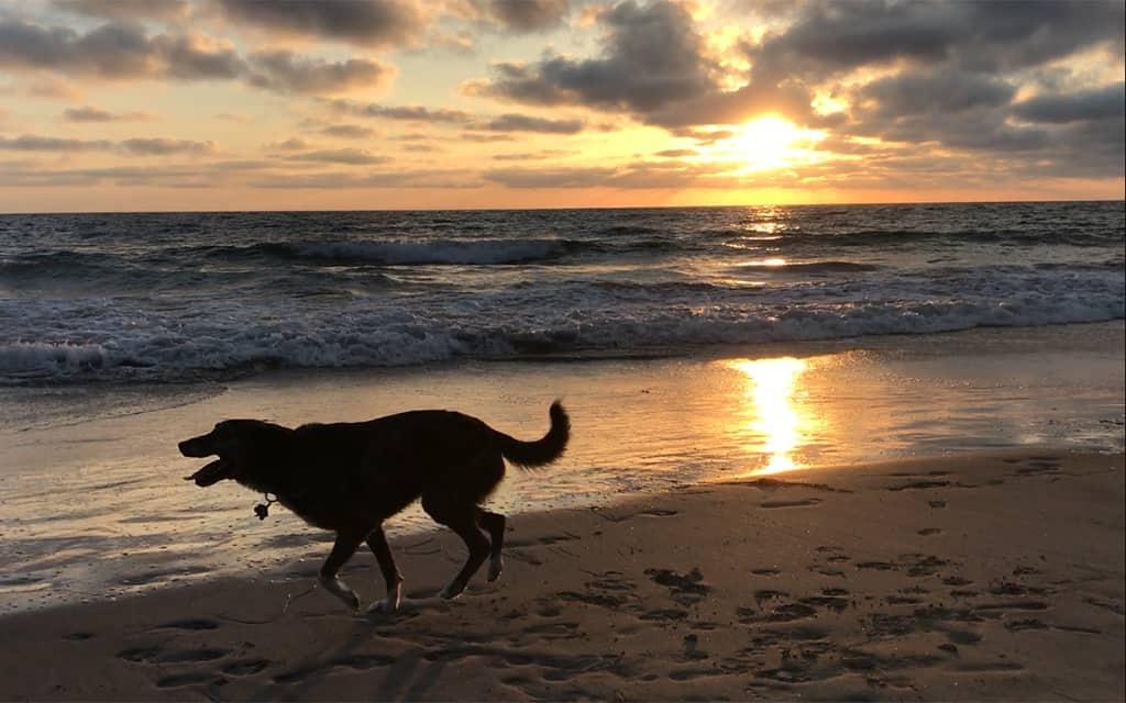 dog friendly, california