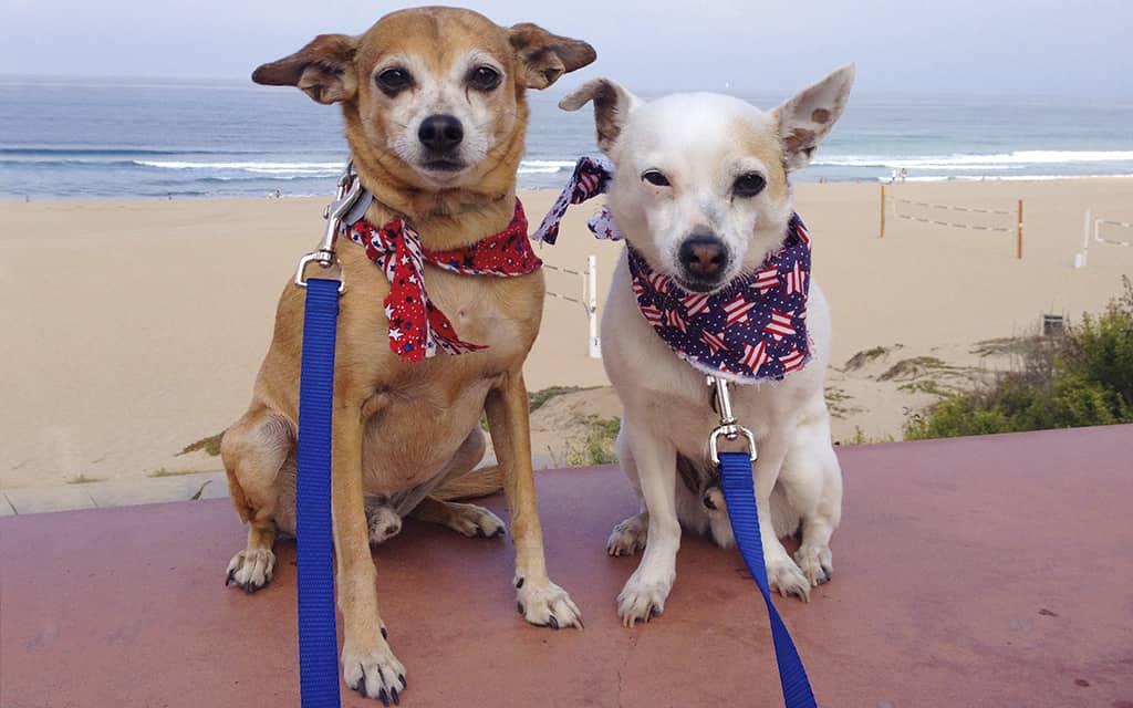 Santa Monica, California, dog-friendly