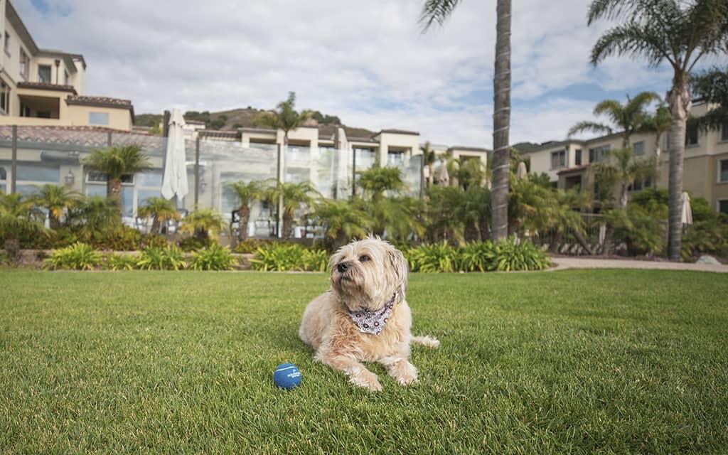 dog friendly, Pismo Beach