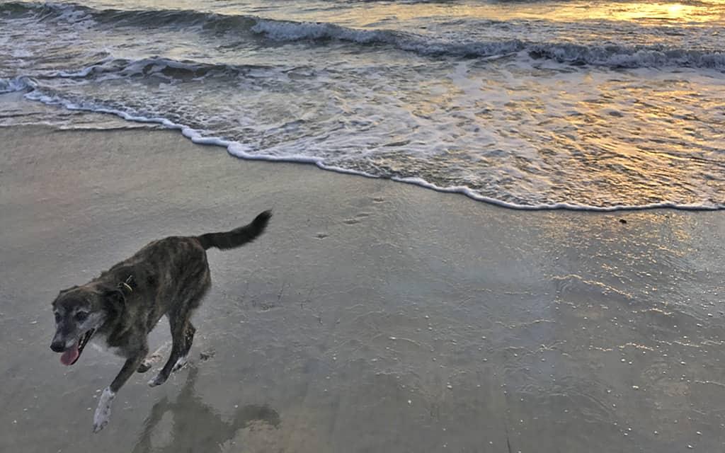 PCH, dog friendly, California