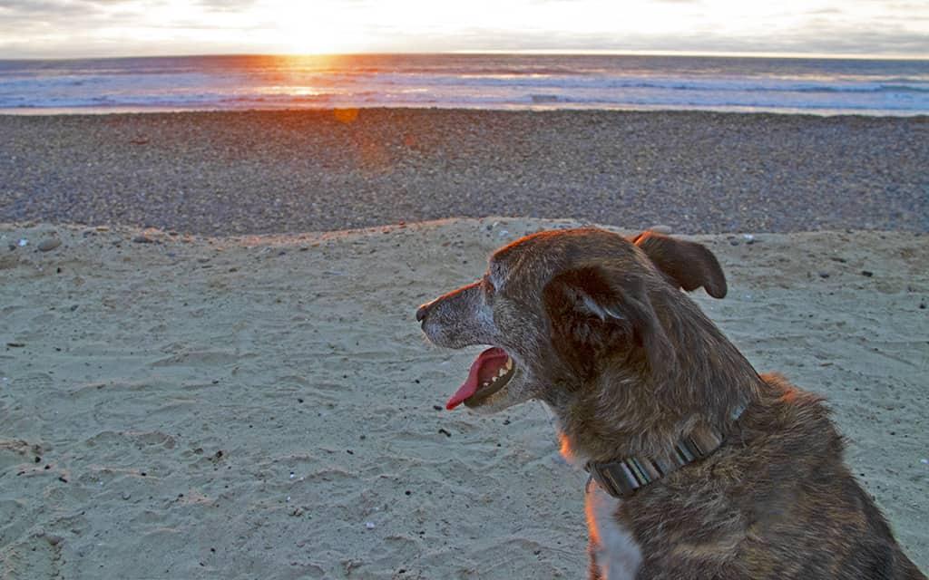 Santa Cruz, dog friendly, California