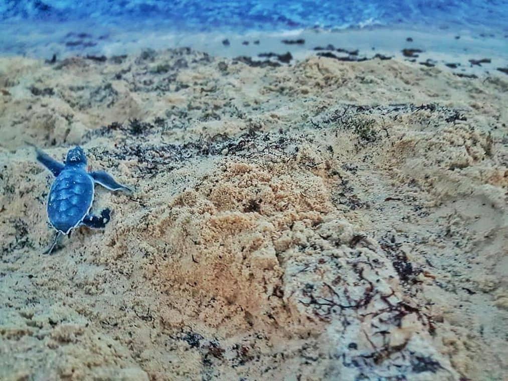 Volunteering on vacation - Baby turtle
