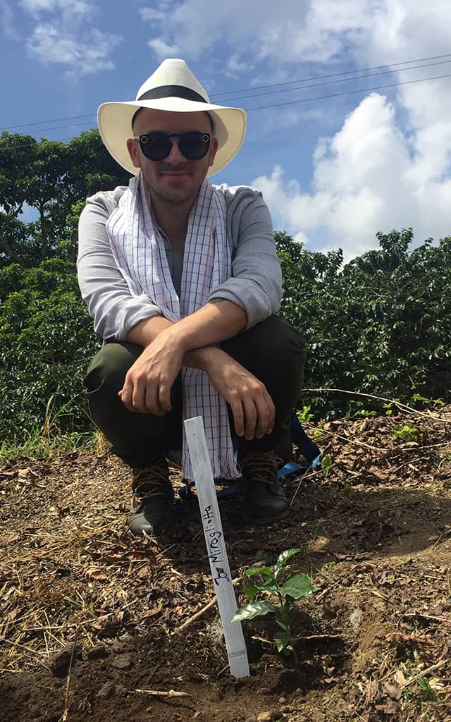 Planting coffee trees in Colombia