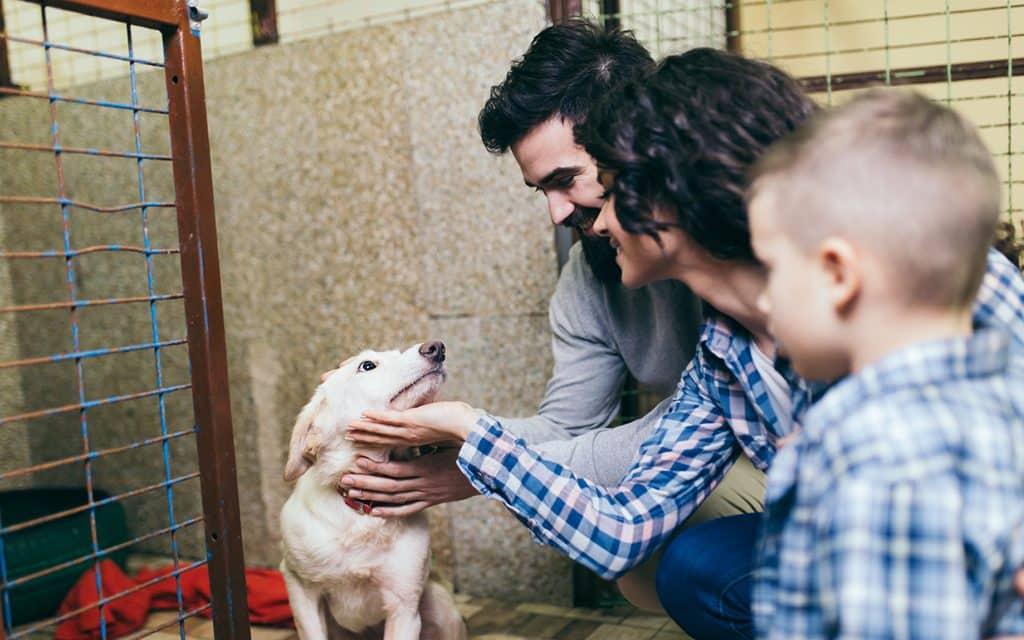 dog shelter - travel for good