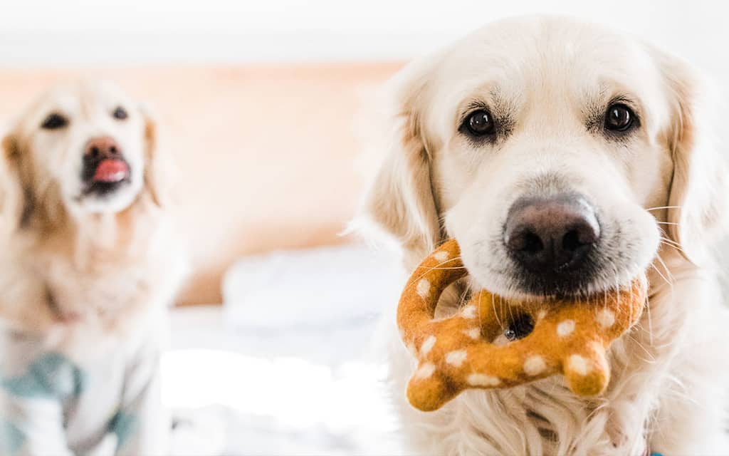 QUIZ: Which of These Crazy Indulgent Hotel Pet Perks Are for Real?
