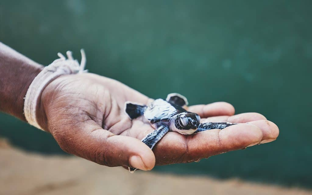 tagging sea turtles - travel for good
