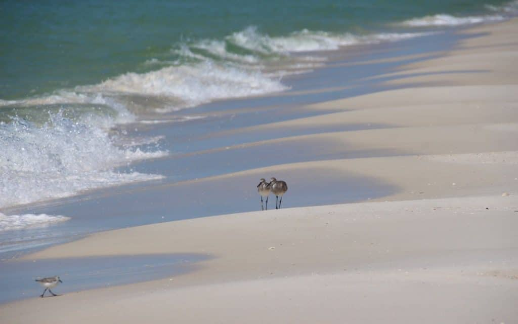 Panama City Beach, Panama City Beach Hotels