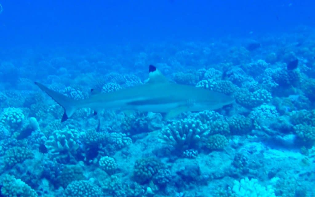 Scuba Diving in French Polynesia