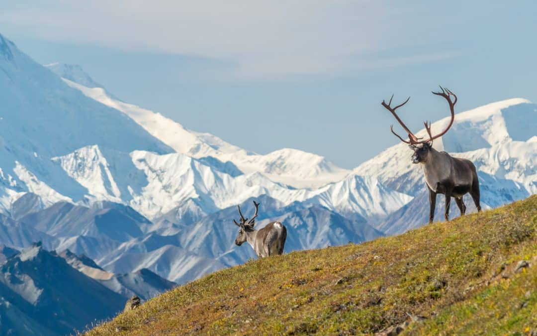 How to spend one perfect week in Alaska