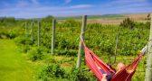 8 vacation rentals with vineyard views