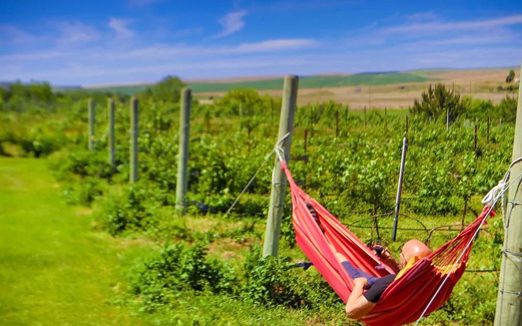 7 vacation rentals with vineyard views