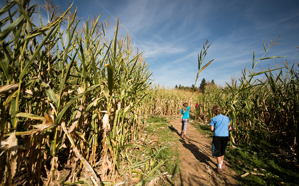 These amazing corn mazes are well worth the trip