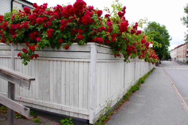 Utopia in Vaxholm, Sweden, picket fence