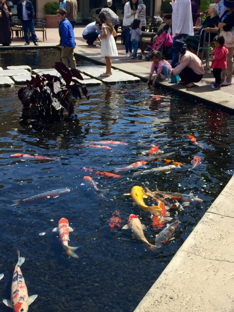 What do couples do in l a inspire for Koi pond music