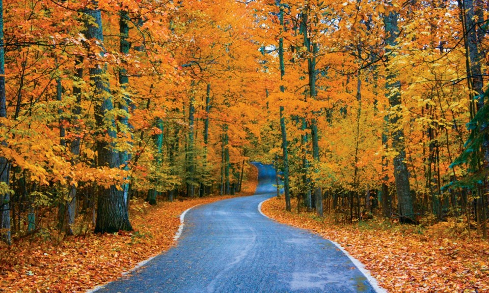 5 Not to Miss Drives in the Midwest this Fall Tunnel of Trees