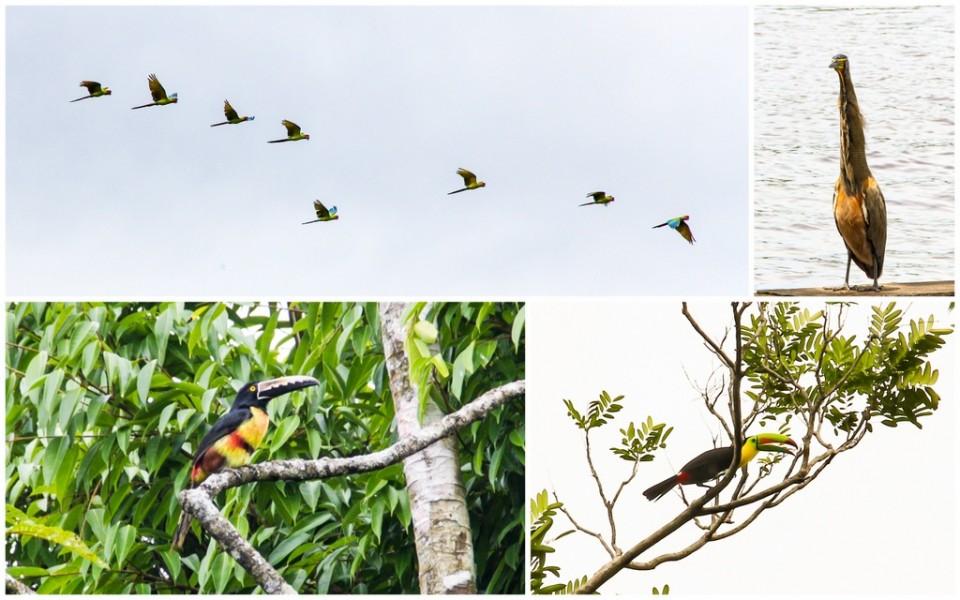 Birdwatching - Tortuguero - HoneyTrek.com