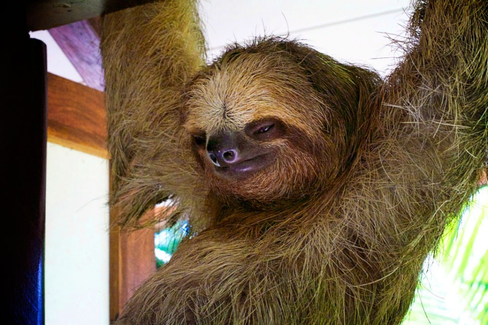 Where to Take Your Kids in 2017 - Sloth hanging out in Tortuguero National Park Costa Rica