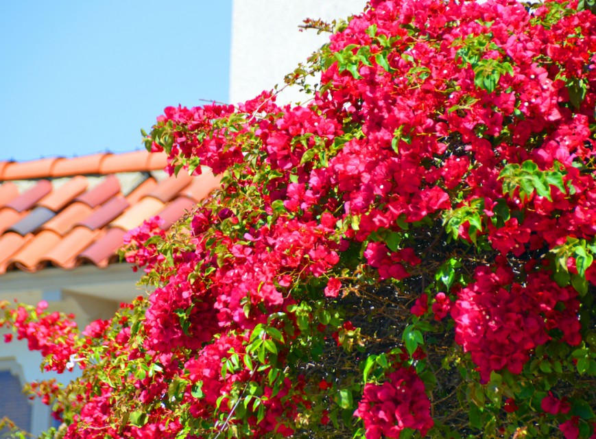 Photo by Marilyn Jones - Coronado Island, San Diego