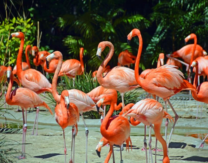 Photo by Marilyn Jones of TravelWithMarilyn - San Diego Zoo