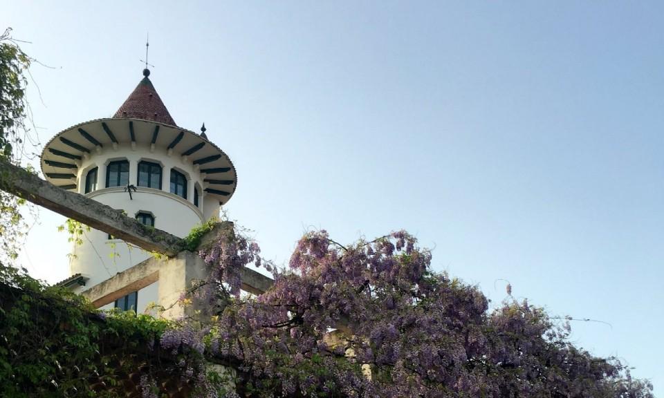 Codorniu Tower and Wisteria