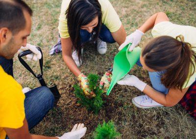 Volunteers watering seedlings
